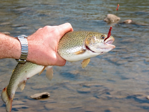 learn trout fishing
